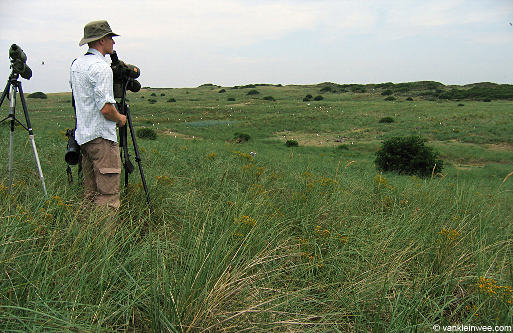 July 25, 2010. A photo of me, observing Lesser Black-backed Gulls and European Herring Gulls in de Kelderhuispolder colony, island of Texel, The Netherlands.