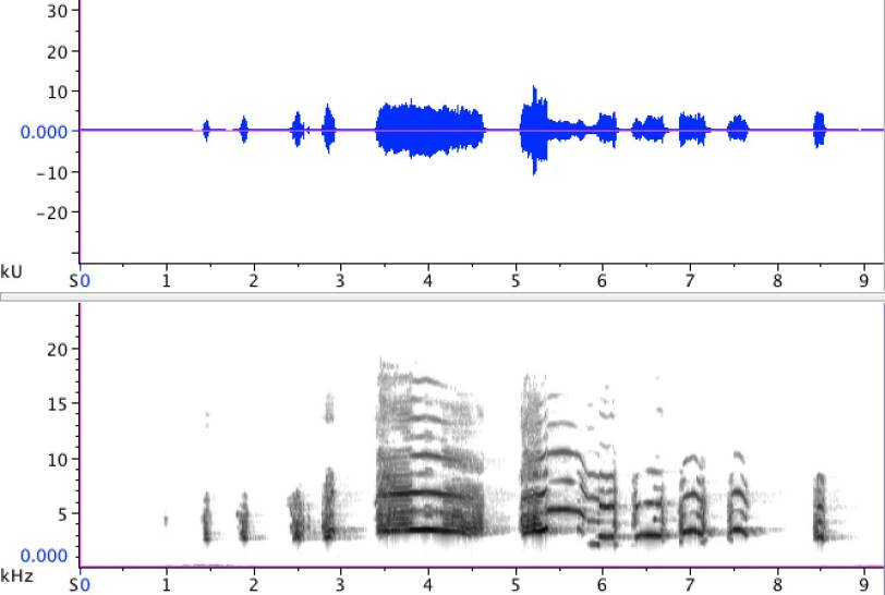 Sonogram of adult Common Gull (Larus canus), performing a long-call. 1 December 2012, Leiden, The Netherlands.