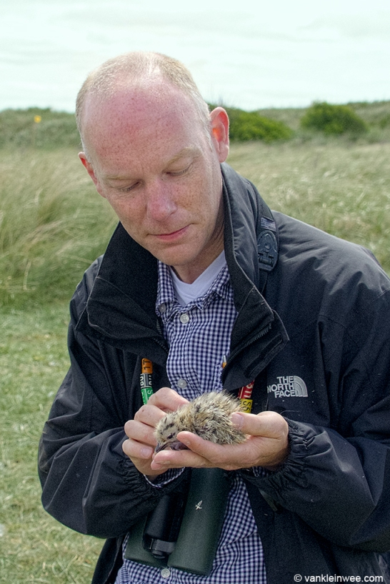 Me with a young Herring Gull chick of just a few days old. Texel, The Netherlands, 8 June 2013.