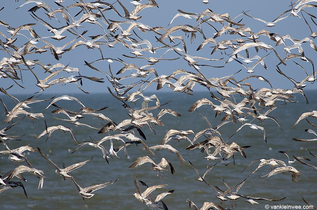 Gulls at the beach of Noordwijk aan Zee, The Netherlands, 14 June 2013.