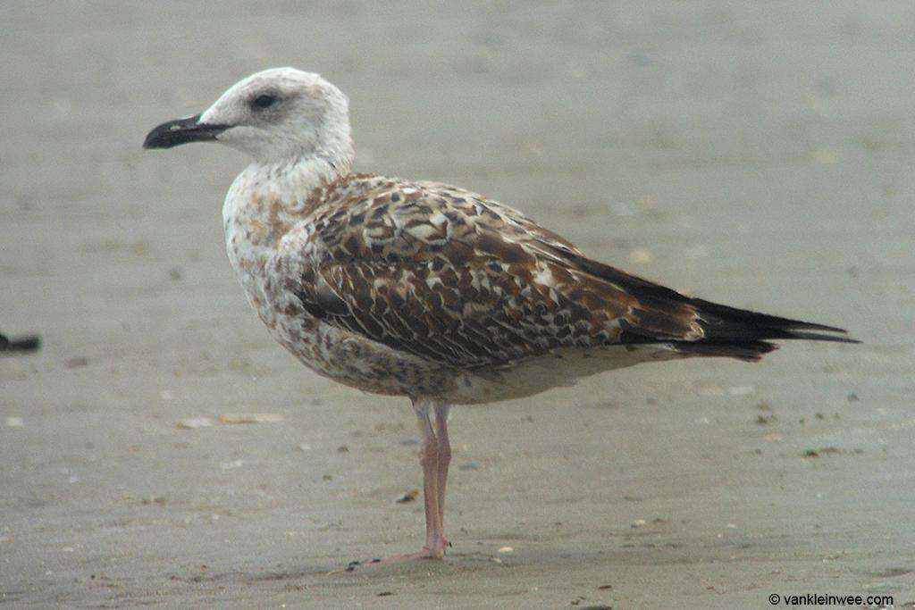 Wijk aan Zee beach, 22 September 2013.