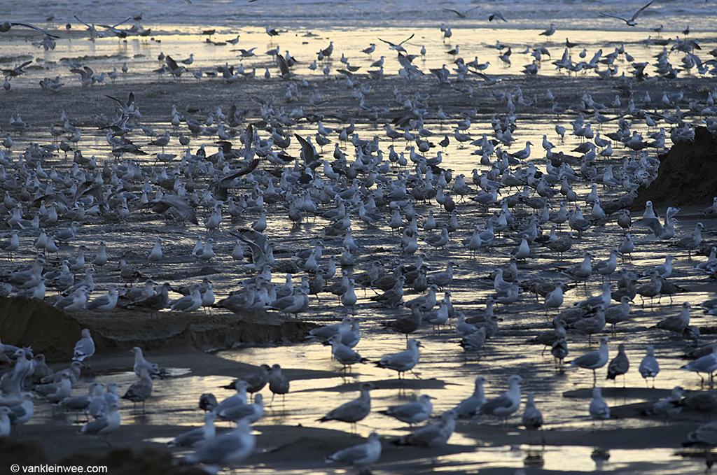 Katwijk-aan-Zee-20131015h
