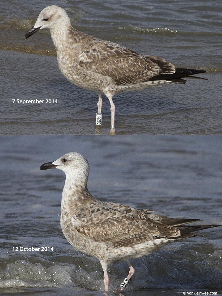 W[062-U]-2014-comparison