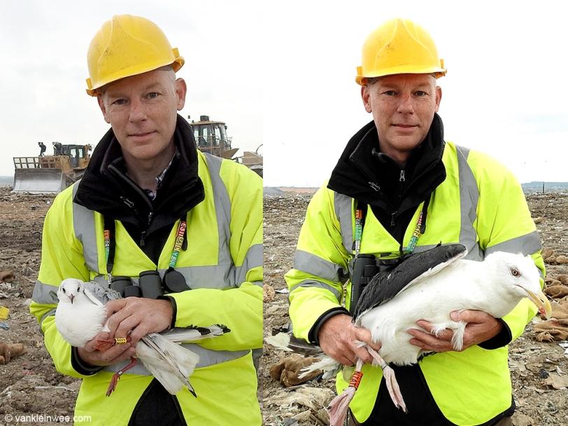 gull-ringing-pitsea-20151010