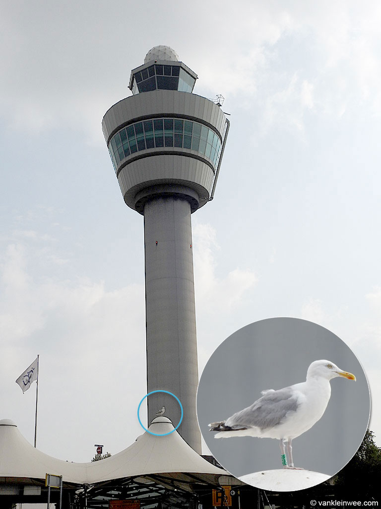 YBAJ-22-July-2016-Amsterdam-Airport-Maarten-van-Kleinwee-5