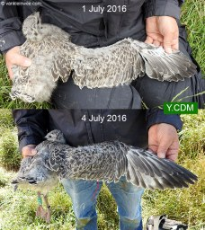 YCDM-1-July-2016-Forteiland-IJmuiden-Maarten-van-Kleinwee-2