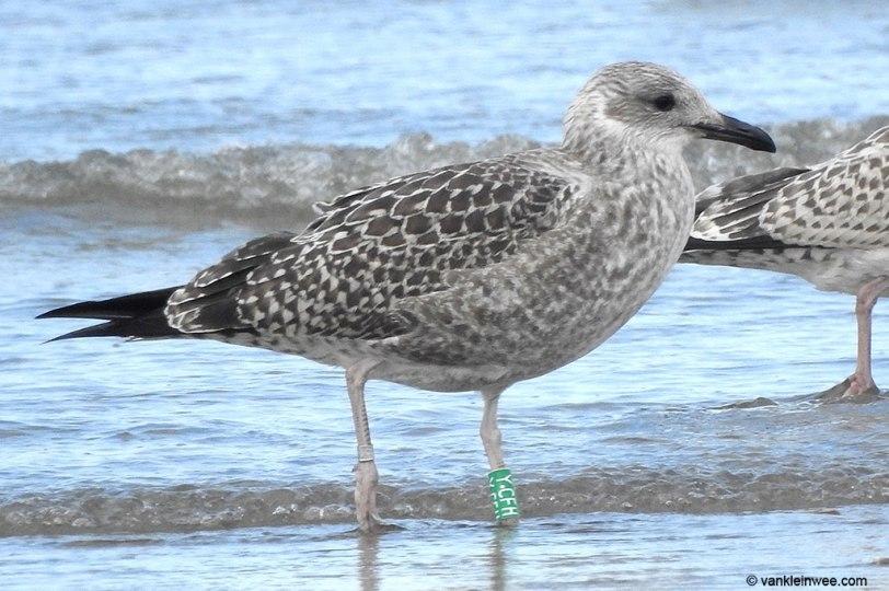 ycfh-5-august-2016-ijmuiden-strand-maarten-van-kleinwee-1