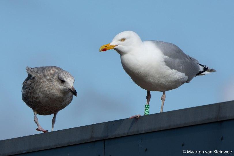 YBDS-16-March-2020-IJmuiden-Forteiland-Maarten-van-Kleinwee