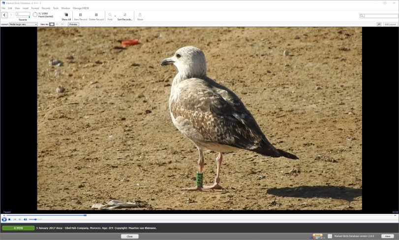 mbdb-2.8.0-video-large-view.jpg