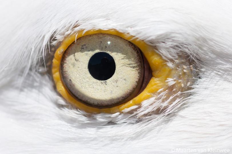 hg-eye-close-up-20200529-1