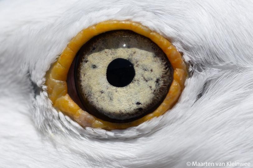 hg-eye-close-up-20200529-2