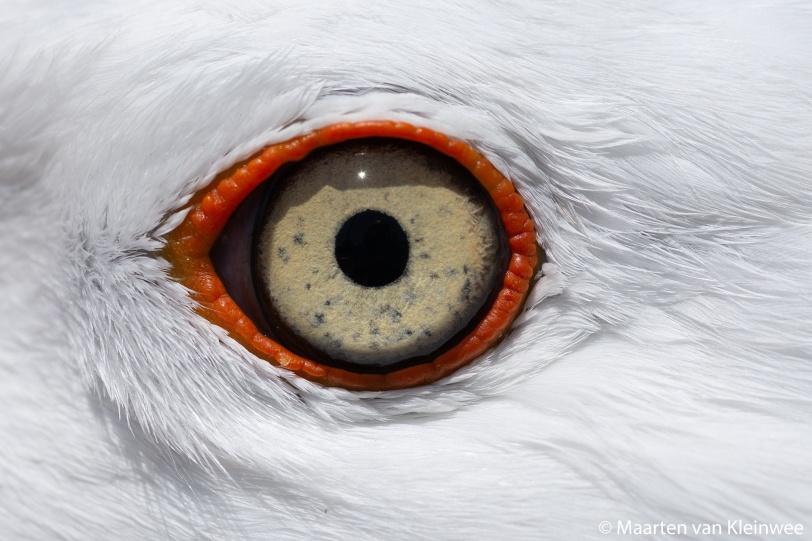 lbbg-eye-close-up-20200529-1