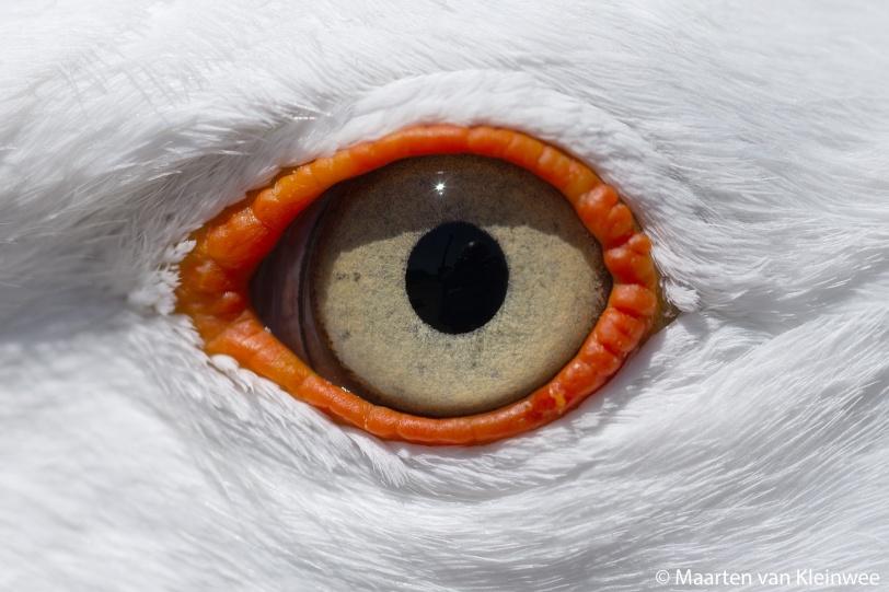lbbg-eye-close-up-20200529-2